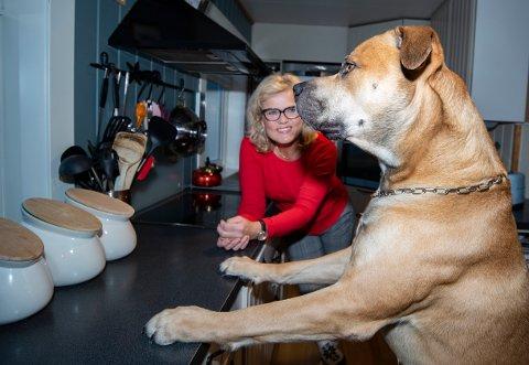 Blandingshunden Brutus (3,5) tiltrekker seg oppmerksomhet med sitt grandiose utseende. Med hjelp fra matmor Krisin Jullumstrø søker han nå make på Finn.