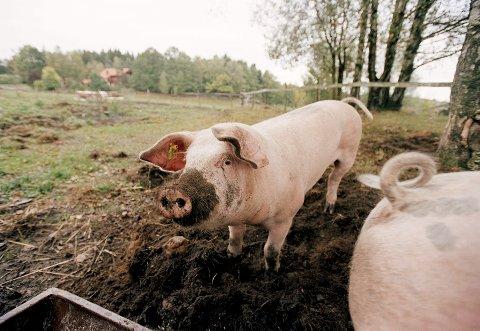 Landbruksministeren ønsker en dreining mot økt matproduksjon
