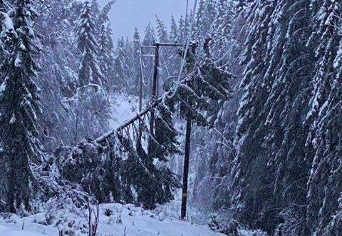 TREFALL: Gran over høgspenten. Trær som gir etter for været har vært et problem i distriktet denne vinteren.