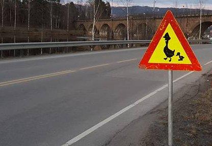 Pass opp for gjess ved innfartsveien til Hønefoss.