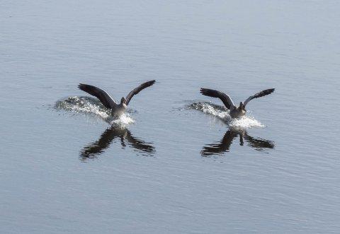 V-stil: - V-stil må det vere om ein skal flyge langt.