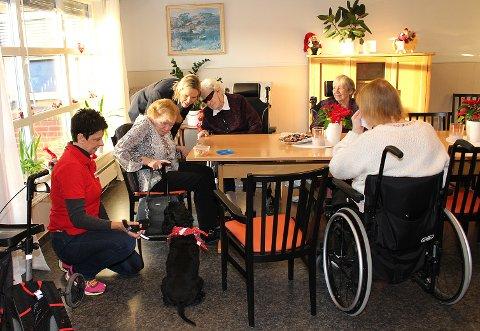 MUNTERT MØTE: Sylvi Listhaug ble fascinert av møtet mellom besøkshunden Nellie og beboerne ved Lørenskog sykehjem torsdag. Fra venstre: Besøksvenn Unn Bakkerud, beboer Aud Åsgård, Listhaug, beboer Liv Jørgensen, beboer Vera Lilleås og beboer Odny Irene Pedersen (med ryggen til).