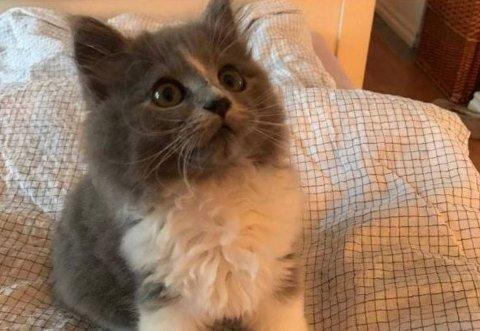 DUMPET: Denne lille hunkatten ble funnet i et skogholt, men har heldigvis fått et nytt hjem.