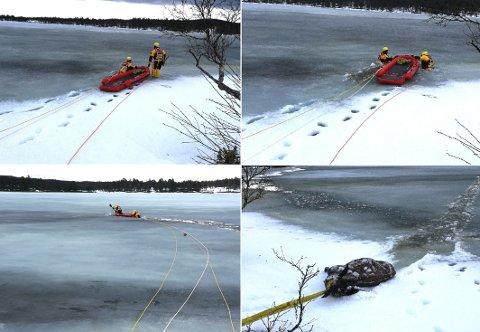 Brannmannskaper fra Tolga og Rendalen fikk, etter en times arbeid i det iskalde vannet, opp den døde elgkolla fra Øvre Tallsjøen.