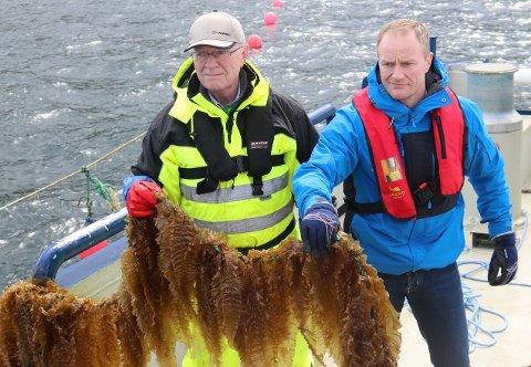 Arbeidende styreleder Johan Hernes og direktør Geir Wenberg i Salten Aqua er positivt overrasket over framdriften i tareprosjektet.
