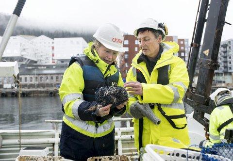 Helene Kvåle (t.v.) og Gry Stenersen ser over blåskjellene som er hentet                   opp fra fjorden. Nå skal skjellene analyseres for å se om det har samlet seg miljøgifter i dem. Foto: SKJALG EKELAND
