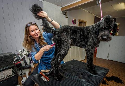 Staselig kar: Balder kommer helt fra Moss for å klippe seg hos Line Olsen på Selbak. – Pågangen er stor før jul, sier hundefrisøren.
