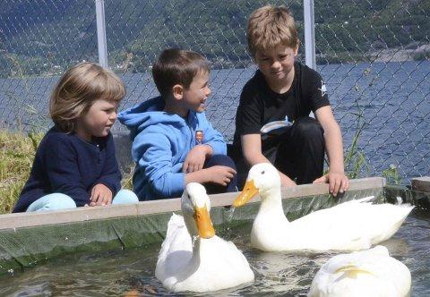 Ved bassengkanten: Søskenbarna Petra Løyning og Mathias Kråkevik har fått besøk av Bjarte André Måkestad (i midten). Alle synes det er kjekt ved andedammen.