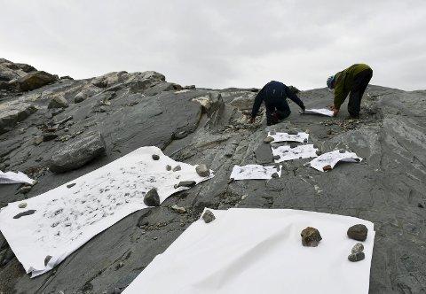 Frottage-teknikken Nygård bruker gir eit unikt uttrykk. Her ser du teikningane spreidd utover berget etter at ho har laga avtrykka ved å gni hendene inn med kol. Foto: Marie Skaaluren.