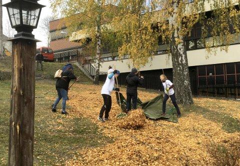 HØSTGULT: Det var høstfargene som dominerte på bakken utenfor Bergverksmuseet torsdag morgen. Men etter dugnaden fra TechnipFMCs ansatte, er det rent, pent og grønt.