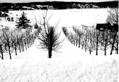 FRUKTHAGE: Harald og Ingrid Sjødalstrand har rundt 1300 plommetrær på jordene ned mot Bunnefjorden.