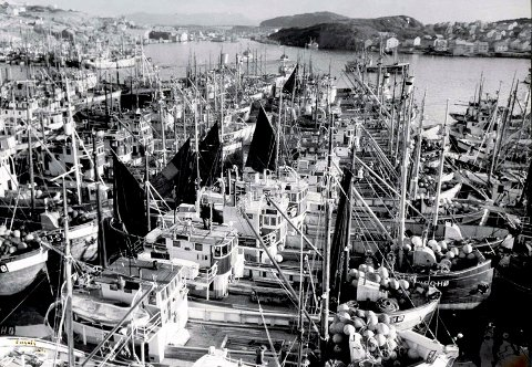 FYLTE HAVNA: Hundrevis av snurpere og garnbåter fylte havna i Kristiansund når det var landligge på 1950-og 1960-tallet.