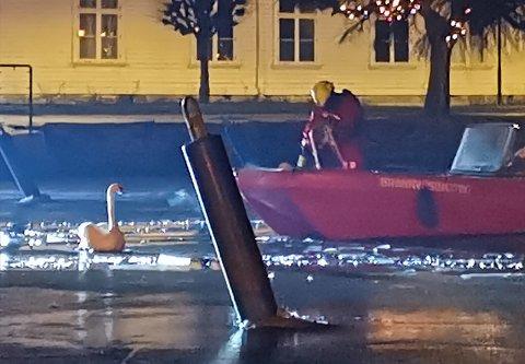 Brannvesenet brukte en båt for å få løs svanen.
