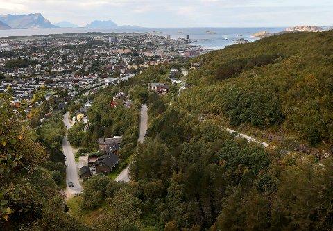 Fjellveien opp til turisthytta på Rønvikfjellet