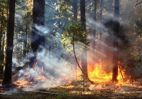 Stor fare: Heftig tørke gjør at brannvesenet nå frykter gressbrann i distriktet. Ar