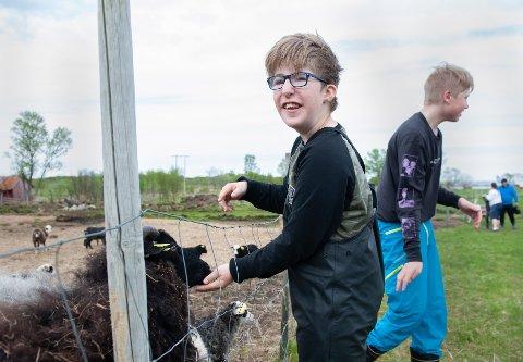 Sivert er en av flere elever ved Kabelvåg skole som stortrives ved Stall Fagerbakken på Gjersvoll.
