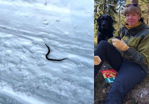 NÆRT MØTE: Marit Ulfsby Rensmoen og hunden Otto støtte plutselig på en huggorm ved skisporet på søndag.