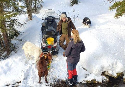 BERGET: Oline Jevne og Sondre Evjen med geitene som har klart seg godt ute gjennom hele vinteren.