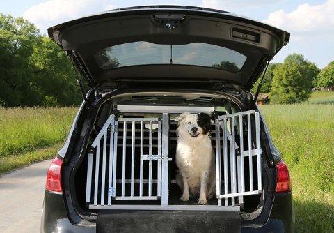 En NAF-test viser at den klart beste måten å transportere en hund i bilen er på er med et robust metallbur.