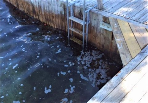 SKYLT VEKK: Hytteeieren opplyser at det før fantes en strandflekk i denne bryggekroken.