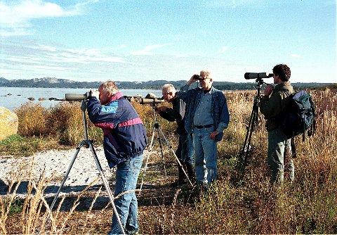 Mølen er kanskje den viktigste trekklokaliteten i Norge. Amatørornitologene som opererer her føler fuglelivet over hele landet på pulsen og frambringer data av stor verdi for den videre ornitologiske forskningen.