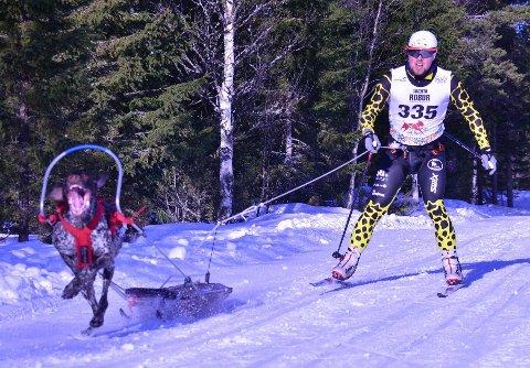 GULL: Truls Johansen og hans superhund Birk i Asker trekkhundklubb tok gull i juniorklassen Pulk i EM hundekjøring nordisk stil arrangert på Åsarne
