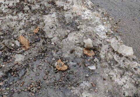 SMELTER FRAM: Hundebæsjen kommer fram hver vår når snøen smelter.