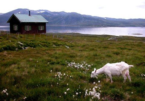 FJELLDRØMMEN: Mange åremålshytter ligger i skogen eller på fjellet. Her fra Hemsedal.