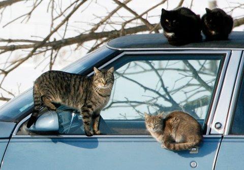 SKAPTE BRÅK: Katter skapte trøbbel i et nabolag i Nes i helgen.