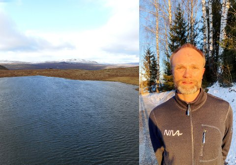 POSITIV UTVIKLING: - Norske innsjøer har blitt renere, men brunere, fastslår Øyvind Garmo, regionleder for Norsk institutt for vannfoskning. Bildet er fra Tjørnosen i Vågå.