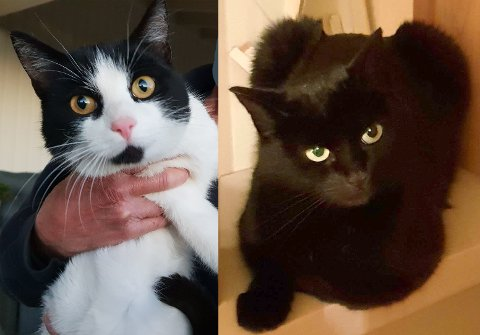 FUNNET: Disse to kattene er funnet, men hvem eier dem?