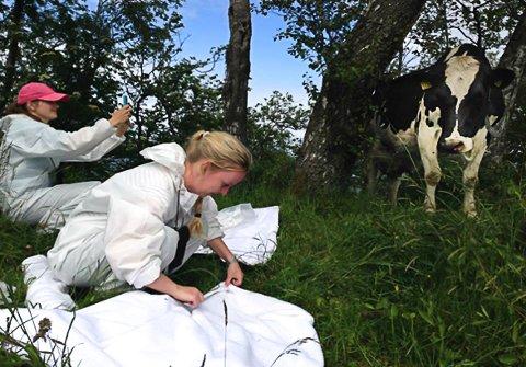 kUFLÅTT: Katrine Mørk Paulsen (foran) og Idunn E. B. Skjetne samlet flått i Rogaland som en del av studiet.