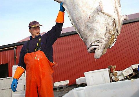 Sjarken til Jørgen Sagli sank etter at den ble påkjørt vei kai i Lofoten langfredag.