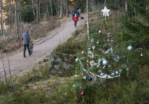 Det blir neppe noen hvit jul på Nordmøre i år, hvis du ikke drar høyt til fjells.