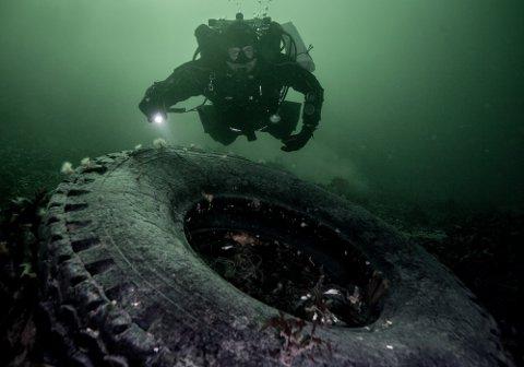 GIFT: I havet er bildekk en stor miljøgift, og Marinreparatørene rydder mange slike. Her er Lars Dalen i vannet ved Vestre Tangen brygge, rett utenfor Signalen.