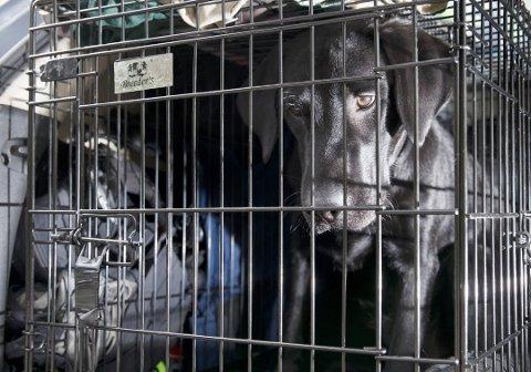 Dyrevelferdsetterforskerne i Agder skal holde til i Arendal, og forebygge, avdekke og bekjempe kriminalitet mot dyr i hele Agder.