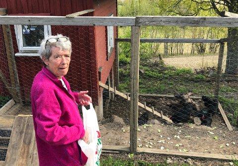 PÅLANDET:Liv Astrid Stern med hanen og de sju hønene hun er matmor for i Dølihagan innerst i Gaupestien i Hakadal.