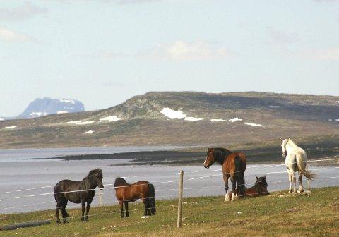 Tinnhølen: Innbyggjarane i Eidfjord har rett til å driva garnfiske i Tinnhølen som ligg innanfor grensene til Hardangervidda nasjonalpark. Men det er ikkje heimel for å køyra bil eller traktor med båthengar heilt fram for å setja den ut på vatnet. Arkivfoto: Johs H. Sekse