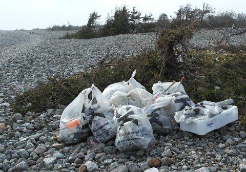 FULLE SEKKER: Rundt 100 sekker med søppel ble samlet inn under lørdagens dugnad. (Foto: Martin Eikeland)