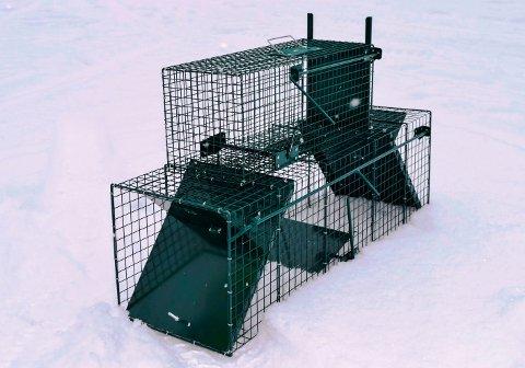 Kattefangsten skal skje ved utsetting av fangstbur med åte.