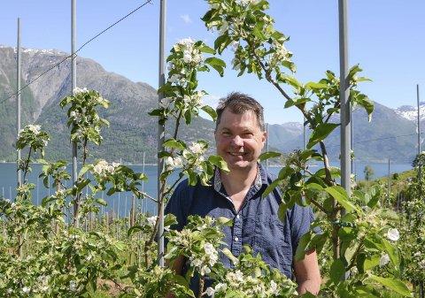 Vil løfta fram konsum: Odd Åge Helvik er styrar på Hardanger fjordfrukt og vil fronta fruktdyrkarane og som  leverer kvalitetsfrukt som egner seg godt til å eta og.  Frukt er og beredskap, seier han.Foto: Mette Bleken