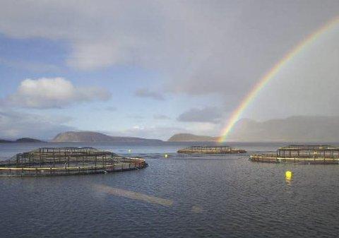 KAN ANSETTE FLERE: Hvis Salmar Nord får flytte to av oppdrettsanleggene i Laksefjorden til andre steder i fjorden, vil de ansette flere. Alternativet er at arbeidsplasser forsvinner fra kommunen.