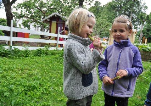 SURT: Sigrid og Helene smaker på rabarbra i grønnsakshagen på Andersrød barnehage.
