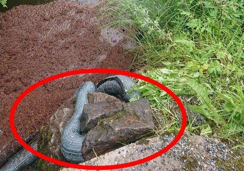 Her er det som ironisk nok skulle vært en anakonda. Riktignok er det bare en lens.