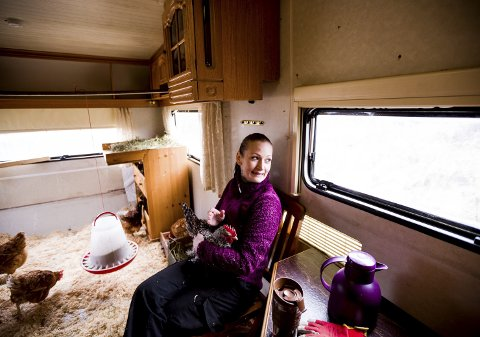 Eireen Svang har innredet en gammel campingvogn til hønsehus, det er en løsning både hun og hønene trives godt med. Alle foto: Tom Gustavsen