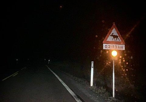 PASS DEG! På strekninger med slike blinkende lys er det for tiden ekstra fare for vilt nær vei.
