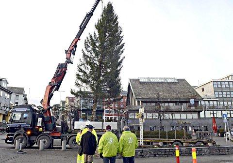 Julegrana er på plass på Piren i Kristiansund.