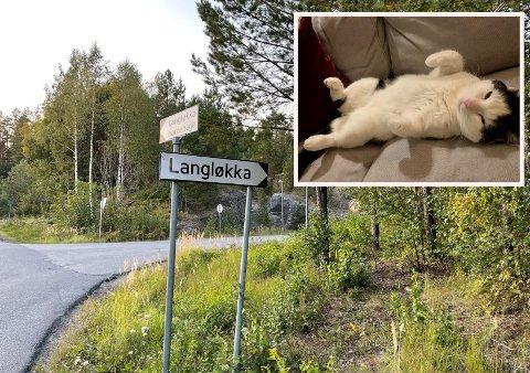FORSVINNER: Katten Felix forsvinner flere ganger i løpet av året. Når han kommer tilbake har han alltid lagt på seg en del.