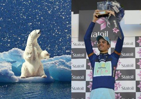 NAVNET ER KLART: Lykkes Polar Park med å få en isbjørn blir navnet Rein, oppkalt etter Arctic Race of Norway-vinneren fra 2015, Rein Taaramäe.
