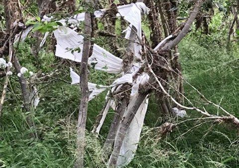 Plast henger seg fast i busker og kratt.